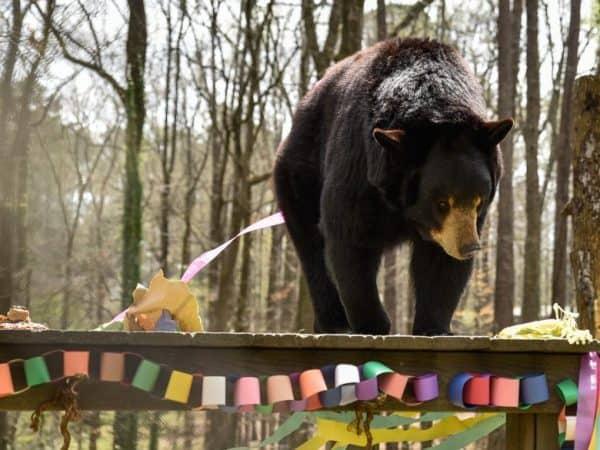bear hollow zoo athens
